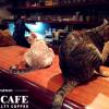 貓孩們的中途樂園-極簡咖啡館