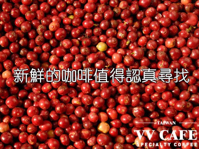 網路上賣得超便宜的咖啡豆基本不新鮮