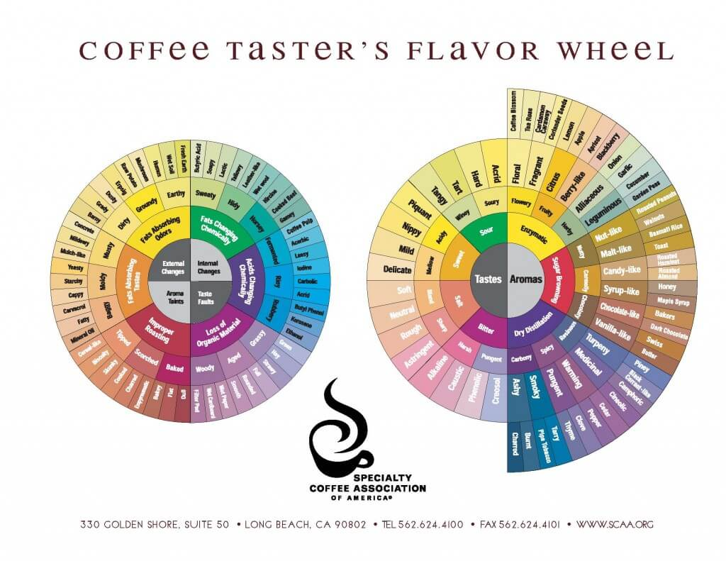 SCAA Poster Coffee Tasters Flavor Wheel